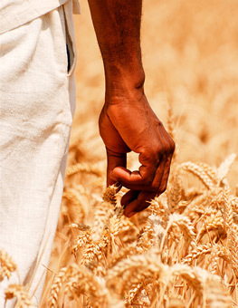 african field
